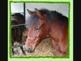 mes chevaux prefere des ecuries des tilleuls