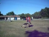 RING-MONDIORING - CAMPAGNE au BOUGUENAIS SPORT CANIN