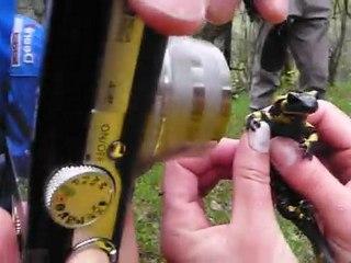 Salamandre WE Diois 2010