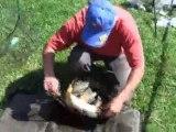 2ème journée de pêche à la carpe au coup