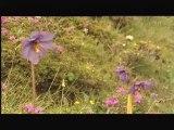 Plantes Medicinales partie 3