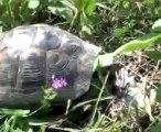 Schildkröte trifft auf Radiohead
