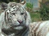 Animaux Zoo d'Amnéville près de Metz (Moselle (57) Lorraine)