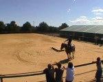 Equitation Western, travail fondation étalon Paint Horse