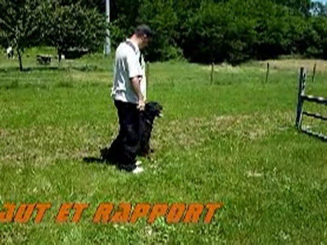 Rottweiler – Balzac demo fun