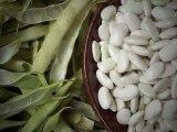 Les haricots frais du J'GO