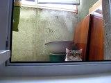 Un chat-espion