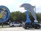 """""""dolphin-research center"""": l 'enclos à dauphins !!  """""""