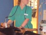 Dyrehospital Østjylland Malling Malling Dyrehospital