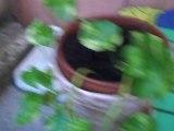 Nature morte dans le jardin