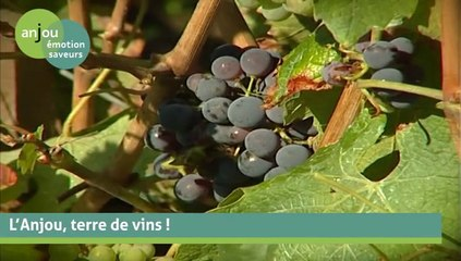 L'Anjou, terre de vins
