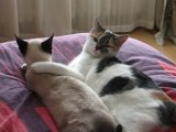 Chat et chatte !