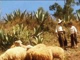 pelicula sebastian de callash - Cajabamba (Parte 4)