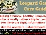 Leopard Gecko Care - Complete care guide for leopard gecko l