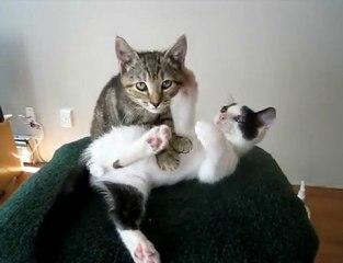 chaton masse chaton