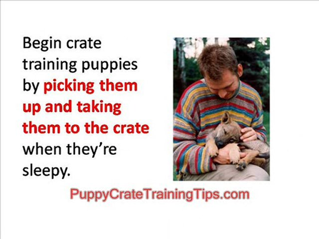 Puppy Crate Training – Teach Your Dog to Sleep Quietly in hi