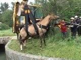 Sauvetage d'un cheval 01.05.2010 Aubagne