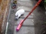 MOV02973 Le lapin nain Bunny qui danse avec le balai ...