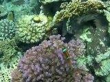 Snorkling in the Red Sea (sharm el sheik)