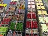 Aalsmeer : vie du marché aux fleurs 15