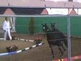Final foal France dressage