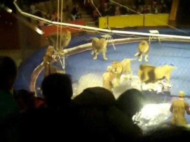 Des lions attaquent leur dompteur dans un cirque