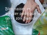 Comment faire pousser des Haricots verts dans un pot ?