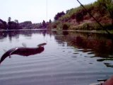 54 - juillet 2006 sur le gardon VIDEO