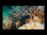 Plongée polynésie, raiatea diving, wreck dive, épave nordby