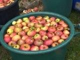 Les pommes amicales de Taurines