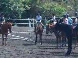 17.10.10 - entrainement obstacle - Sandra Rebelle
