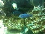 Cichlides Aquarium Video lemondedelinfo
