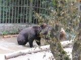 Bärenbad im Wildgehege Hellenthal