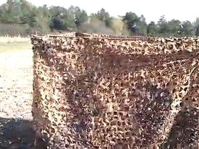 Cabane camo pour la palombe