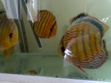 mes discus sauvages