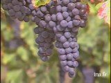Volet vin : Les vins des côtes de Bordeaux
