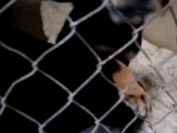 Hornell Animal Shelter #3 - happy puppies