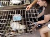 Hornell Animal Shelter #6 - kittens
