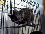 Hornell Animal Shelter 11 - lots of kittens