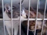 Hornell Animal Shelter #13 - more kittens