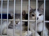 Hornell Animal Shelter #15 - two kittens
