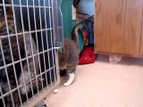 Hornell Animal Shelter 22 - cat in cage, cat on floor