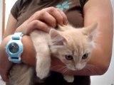 Hornell Animal Shelter #36 - very happy kitten