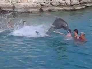 Yunuslarla yüzme havuzunda kaza