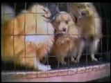 Cruauté envers les animaux 1 sur 5