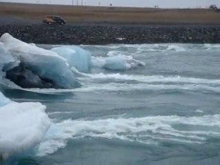 Islande phoques jouant