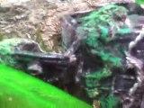 räkor, snäckor och yngel - shrimps, snails and smallfishes