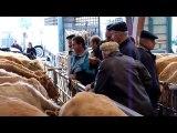 Marché aux chevaux Foire Saint-Martin - Saint-Hilaire-du-Hët