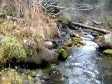 Cariboo Gold Prospecting Trip, part 3, Ladies Creek