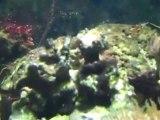 Pests in the Reef Aquarium. Unwanted guests